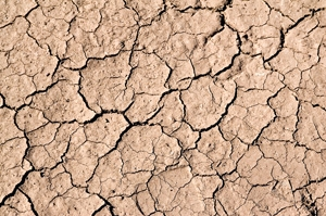 Lessons from the 2011 Drought