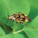 Plant Bug Web