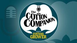 Cotton Companion Featured IImage