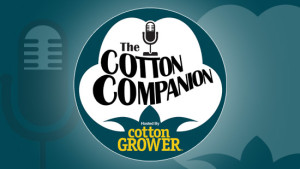 Cotton Companion Featured IImage
