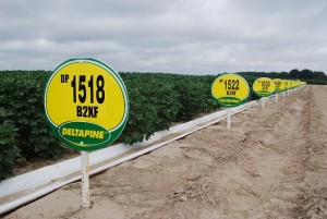 Deltapine Field Signs Web