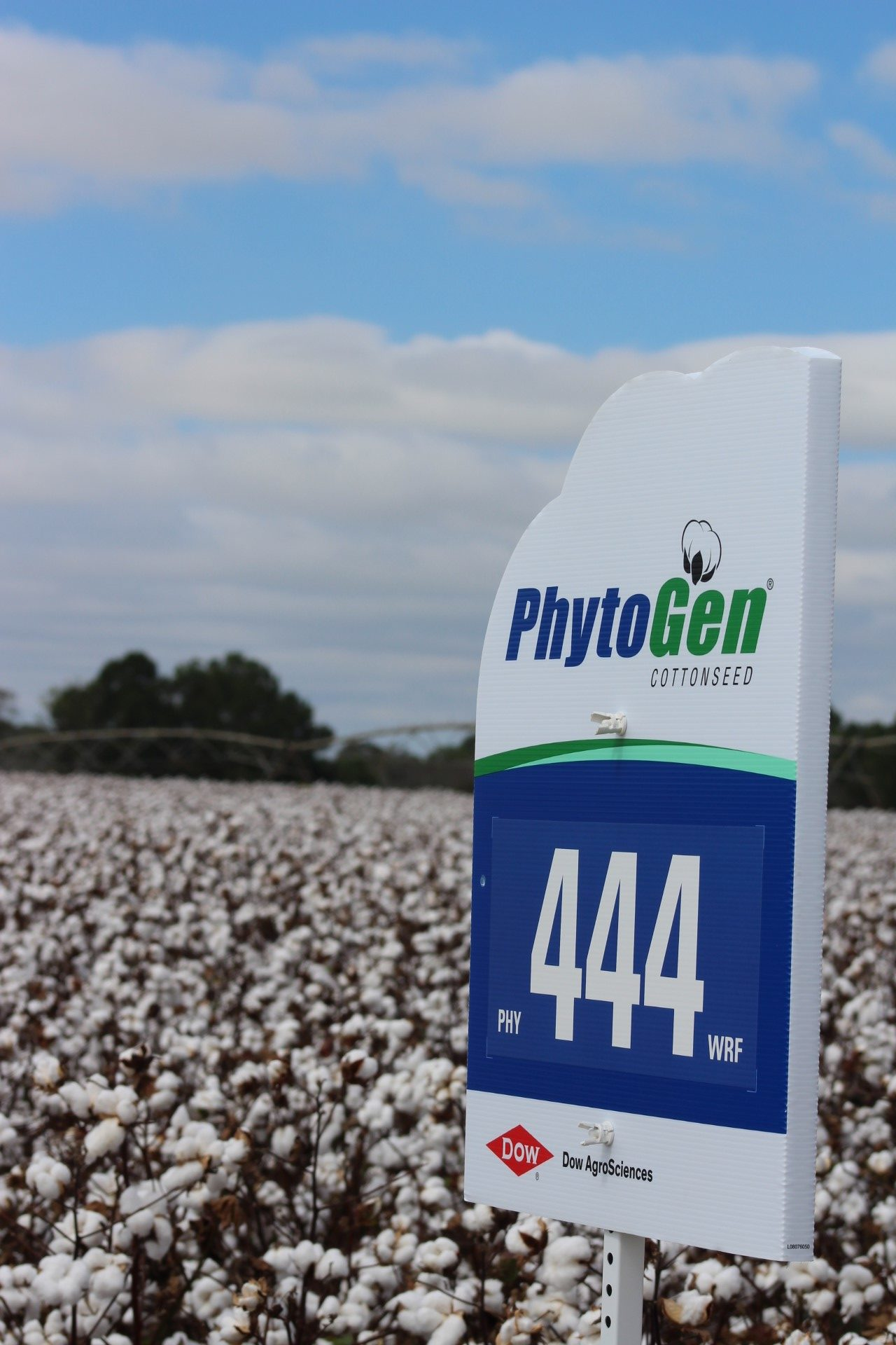 Upland Varieties With Acala-like Quality Improve Profit Potential - Cotton Grower