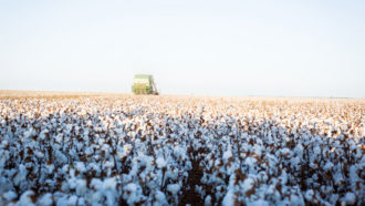 Chris Sparks of Harlingen, Texas, cotton field.