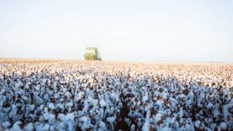 Chris Sparks of Harlingen, Texas, cotton field.