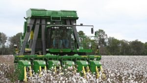 Wrangler, TAWC Partner for Efficient Water Use in Cotton