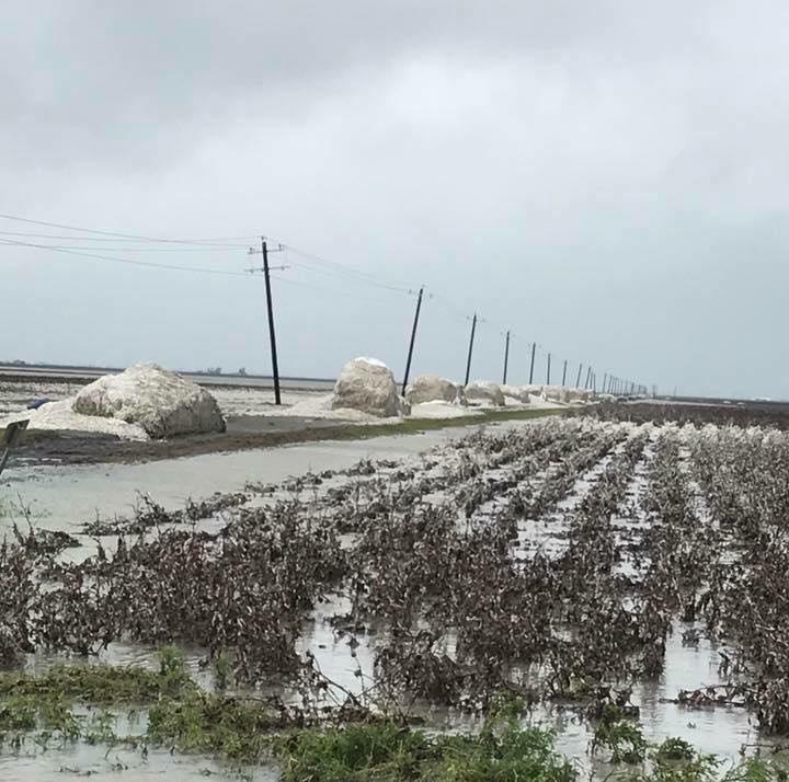 NCC Statement Re: Hurricane Harvey