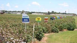 Results from 2017 Variety Trials in Mid-South and GA