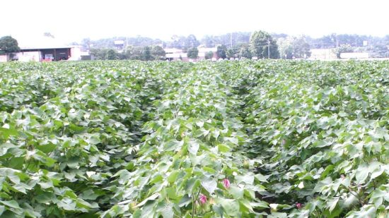 The Bipartisan Budget Act: All About Cotton and Generic Base