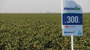 Texas-Tough PhytoGen® Helps Growers Thrive on High Plains