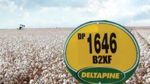 Deltapine NPE Program Begins Class of 19 Evaluations